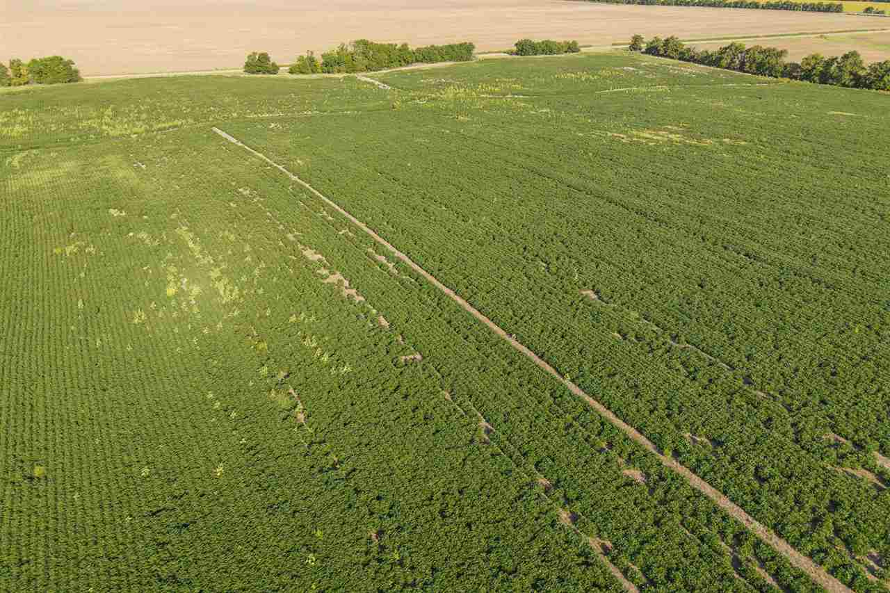 For Sale: 79.3 +/- Acres  20th Rd., Lyons KS